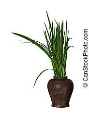 3D Rendering Sansevieria Plant on White