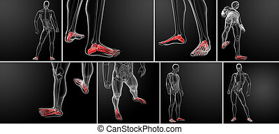 3d rendering x-ray of foot