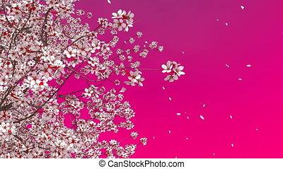 3D sakura cherry tree blossom and falling petals -...