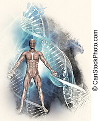 3D sketched medical background with male figure and DNA Strands