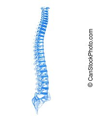 3d spine  - 3d rendered illustration of human spine