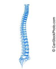 3d spine - 3d rendered illustration of human spine