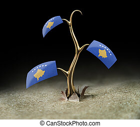 3d sprout with Kosovo flag on black