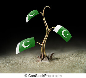 3d sprout with Pakistan flag on black