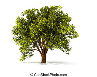 isolated summer tree with red foliage