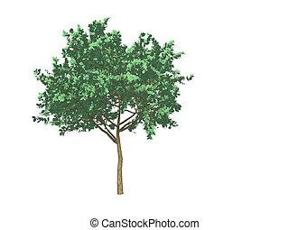 3d tree on white