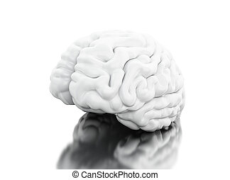 3d View of human brain. Science anatomy concept