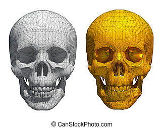 3d White and golden skull wireframe