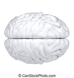 3d white human brain. View from above