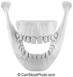 3d wireframe over  human jaw bone with teeth