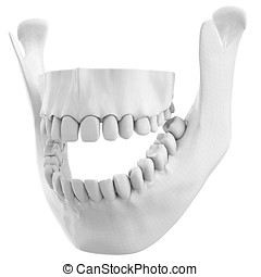 3d wireframe over human jaw bone with teeth - 3d wireframe...