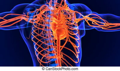 Circulatory system is a network consisting of blood, blood vessels, and the heart.