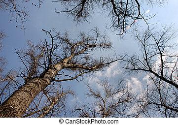 4, árvores