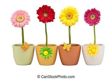 4, горшок, цветок, цветы, gerbera