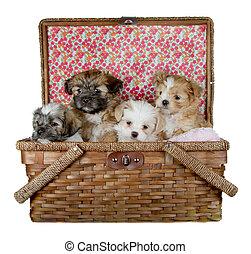 4, バスケット, ピクニック, 子犬