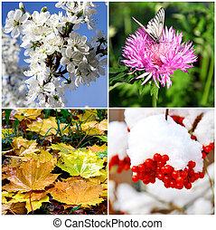 4, 冬, 春, コラージュ, -, 秋, 季節, 夏