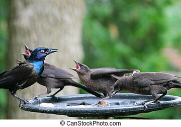 4 birds 2