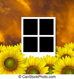 4 blank photo frame on beautiful yellow Sunflower petals closeup