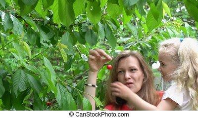 4, dzierżawa, wiśnie, znowu, dziewczyna, stary, berries.,...