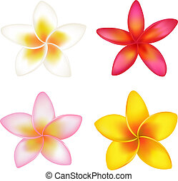 Set Of 4 Colorful Fragipani, Isolated On White