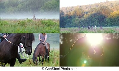 4 in 1: young people riding horses in nature. foggy weather....