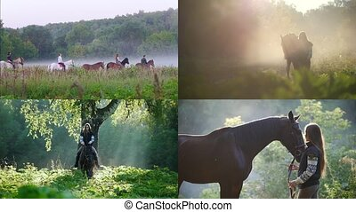 4 in 1: young woman riding a horse in nature. foggy weather....