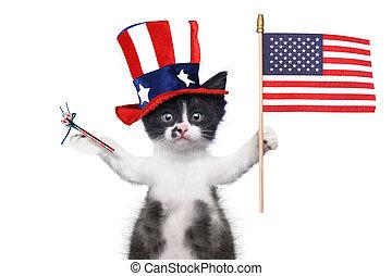 4 juillet, chaton, vacances, américain, célébrer, rigolote