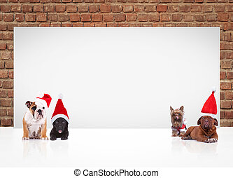 4 little dogs wearing santa hats near billboard