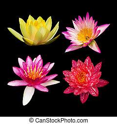 4 lotus on black background