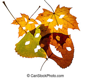 4 Overlapping Leaves on White Background - Four...
