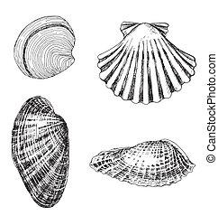 4 shells - set of 4 hand-drawn shells