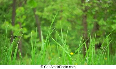 4, voix, herbe, vent, k, birds., beau, footage., forêt, vert