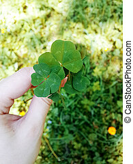 4 zöld, clover.