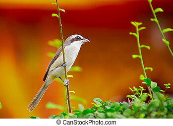 43- bird on the bush - little gray color bird sitting on the...