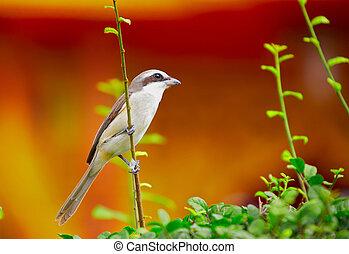 43-, vogel, op, de struik