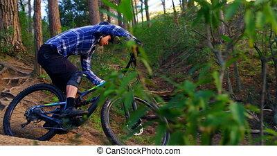 4k, верховая езда, велосипед, человек, лес