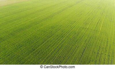 4k. A flight over an endless green field. Aerial photography