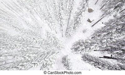4K Aerial Background High Above Winter Snow Covered Trees in...