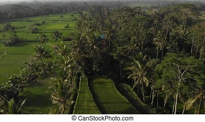 4K aerial drone flying video of tropical landscape with rice...