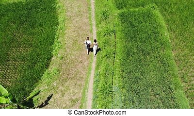 4K Aerial drone shot of tourists on vacation walking the path in rice paddy terrace fields on Bali island.