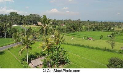 4K aerial flying video of green rice fields close to volcano...