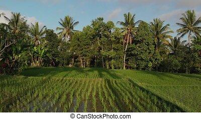 4K aerial flying video of rainforest jungle landscape at...