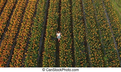 4K aerial flying video of woman on a marigold field....