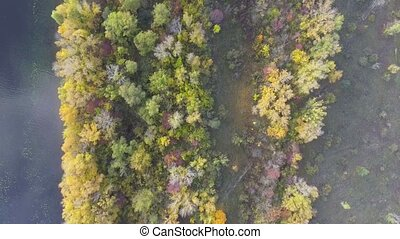 4k aerial footage fly over forest in fall time. View from...