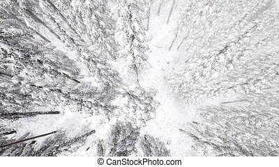4K Aerial Snow Covered Trees Drone Footage Landscape Winter...