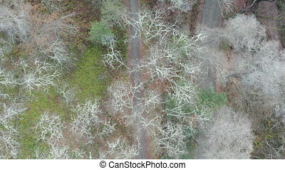 4k aerial video following a hiking trail with dried and green trees in the sides in Southern Oregon city