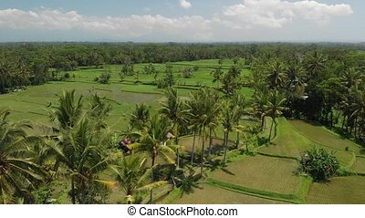 4K aerial view of beautiful tropical landscape. Bali island.