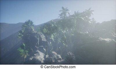 4k Amazing Sunrise at Palm Oil Tree Plantation. Aerial birds...