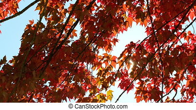 4k, automne, gros plan, feuilles