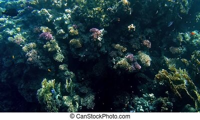4k beautiful underwater video of coral reef with growing...